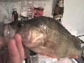 рыбалка в свистухе